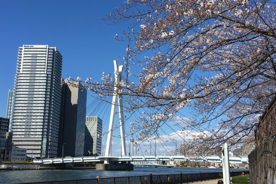 3月22日(日)【お花見ワイン会】隅田川・スカイツリー・桜を眺めながら…  開催報告